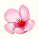 File:The Sakura Garden Logo.png
