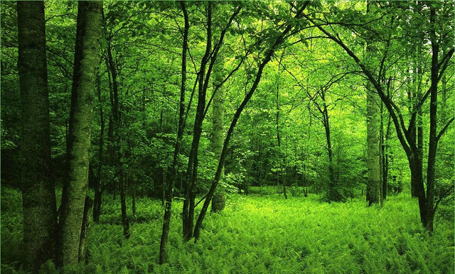 File:Deep Forest.png