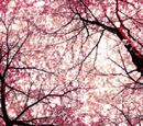Sacred Blossom
