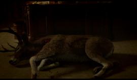 Deer2-TBAAL