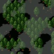 Forestofdespair4