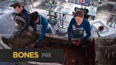 """BONES The Tree Victim from """"The Psychic in the Soup"""" FOX BROADCASTING"""