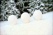 090 Snowball