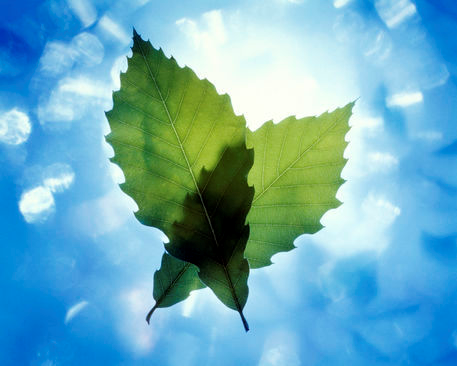 File:Leaves.png