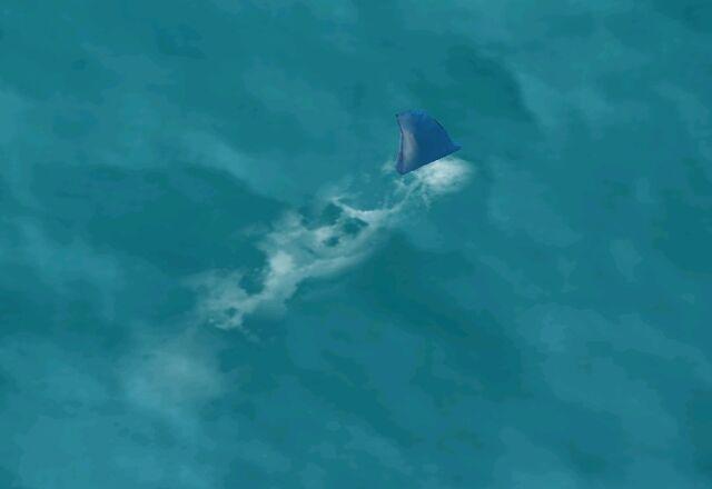 File:Shark.jpeg