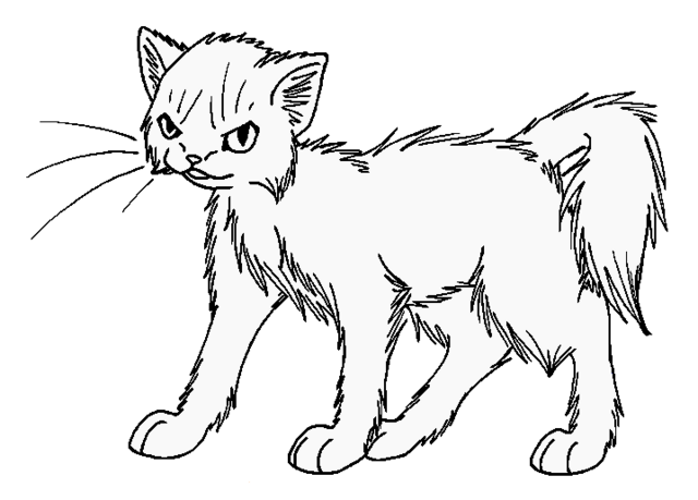 File:Long haired cat.png