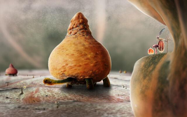 File:Plum Tortoise.jpg