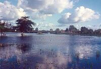 Pantanal Mato-grossense.jpg