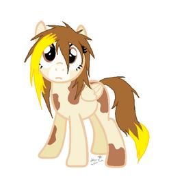Chocolate Chip Pony