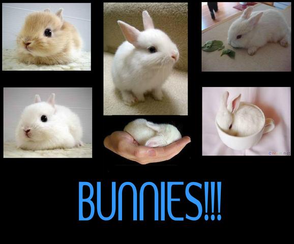 File:Bunn.png