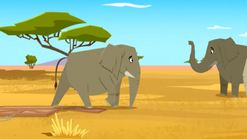 Elephant35