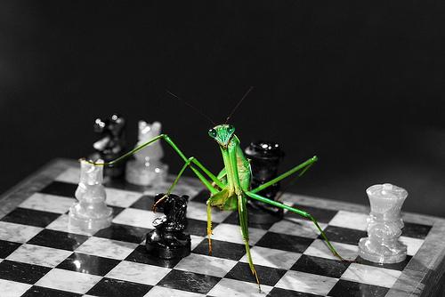 File:Playing Mantis.jpg