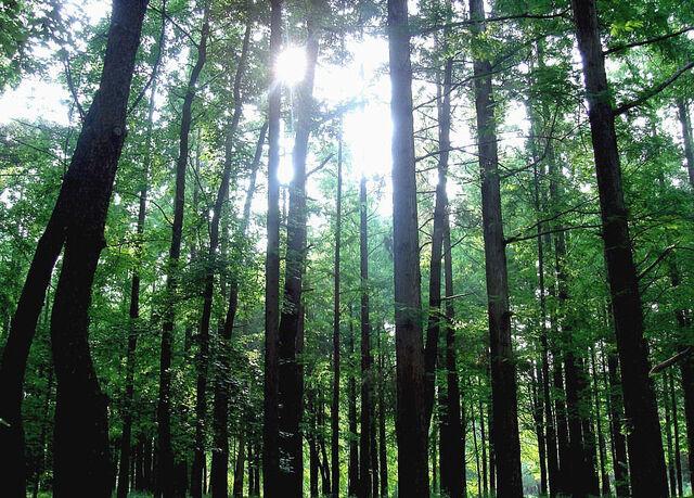 檔案:Forest Osaka Japan.jpg