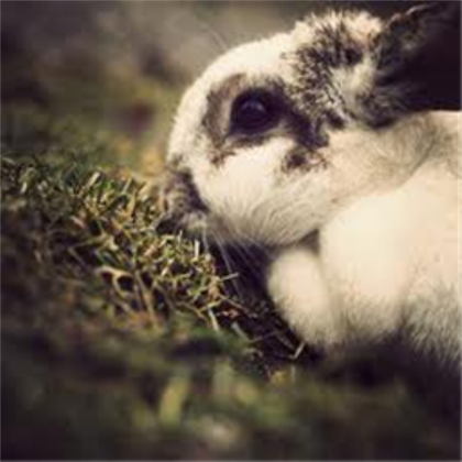 File:Spottedbunny.png
