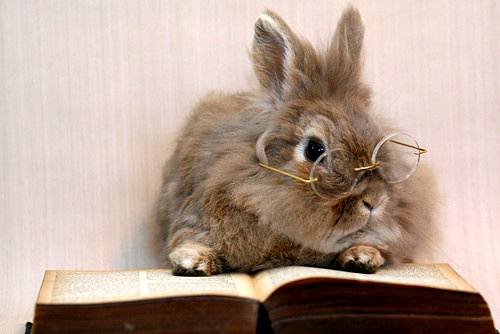 File:Bunny-with-glasses-reading zpsd818eebf.jpg