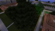 Byzanthium tree farm
