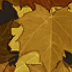 File:Autumn Camouflage CoDG.png