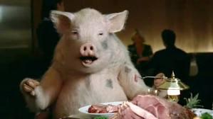 File:Pig wrong.jpg