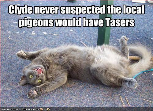 File:Tazed cat.jpg