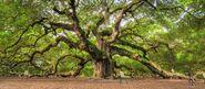 Ivy's Tree Pic 2