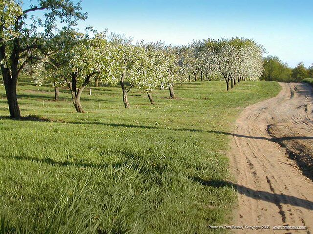 File:OrchARDS.jpg