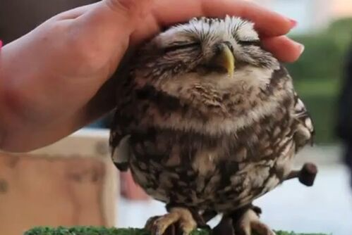 Cute-owl