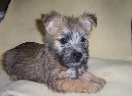 Horaces pup