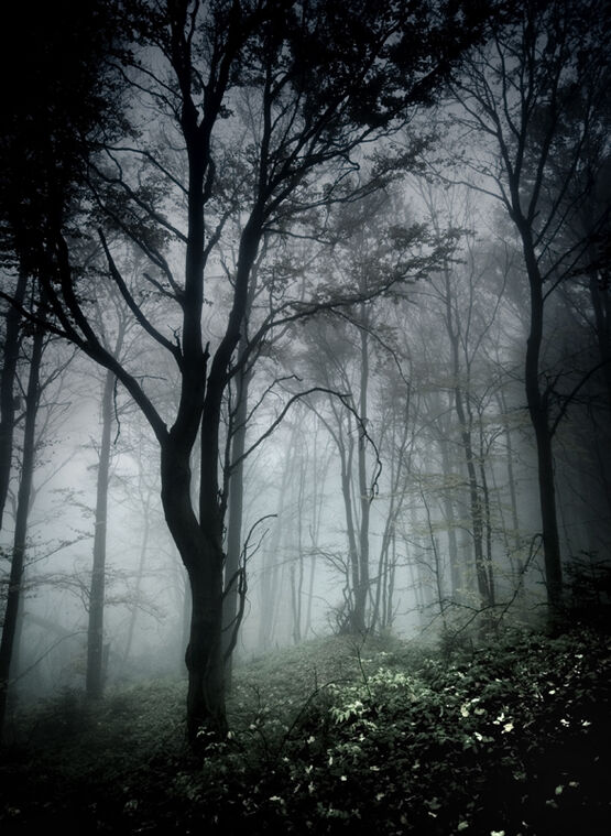 Dark in forest by szuwar