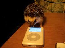 Hedgehog2 zpsde046c3c