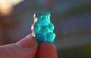 Bear in hand