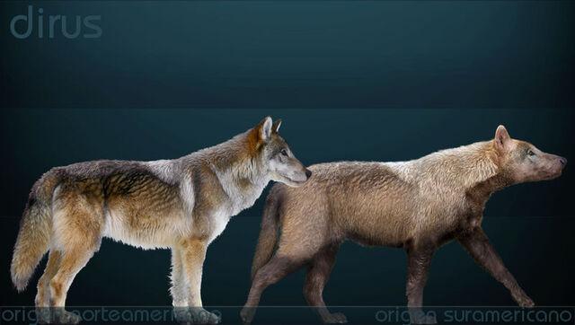 File:Canis dirus Sergiodlarosa.jpg