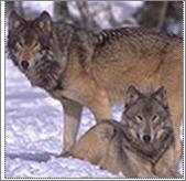 File:Gpwolf.png