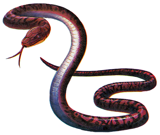 File:RE Adder.png