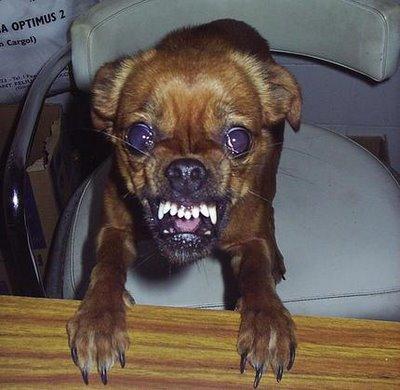 File:Mad dog.jpg