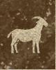 Caravaneer Industry - Goat Breeding