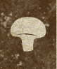 Caravaneer Industry - Mushroom Cultivation