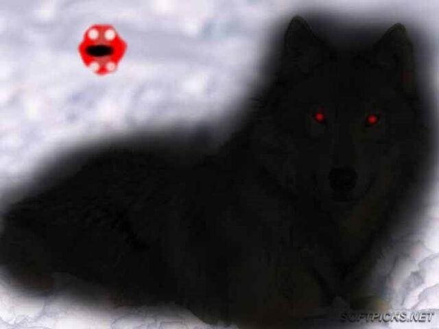File:Wilk czarny.jpg
