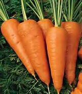 Chantenayredcorecarrot