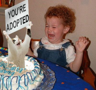 File:Adopted sign cat cake.jpg