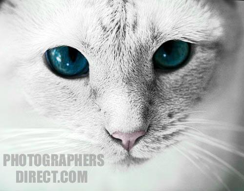 Sapphire.rlp