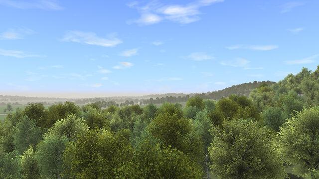 File:Big trees.jpg