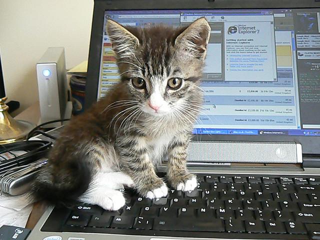File:Keyboard kitten.jpg