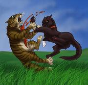 Warriors-warrior-cats-2582276-600-576