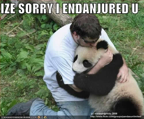 File:Funny-pictures-human-apologizes-to-panda1.jpg