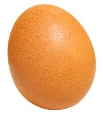 Z-egg 1