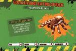 Deadly60Factsheet-Goliath Bird Eating Spider