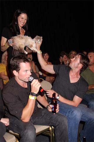 File:Kitty-stacy-daniel-michael.jpg