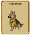TQASheepdog