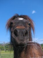 HorseJPG