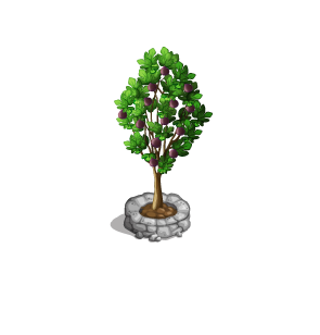 File:Tree-Fig.png